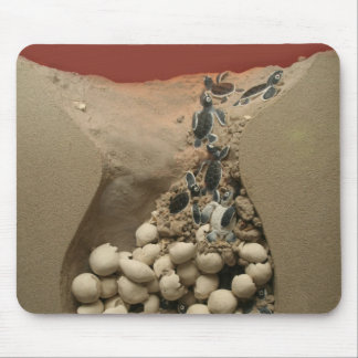 Baby Turtle Eggs Hatching Mouse Pad