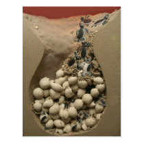 Baby Turtle Eggs Hatching Postcard