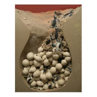 Baby Turtle Eggs Hatching Postcard