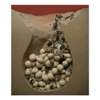 Baby Turtle Eggs Hatching Poster