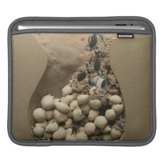 Baby Turtle Eggs Hatching Sleeve For iPads