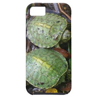 Baby Turtles iPhone 5 case