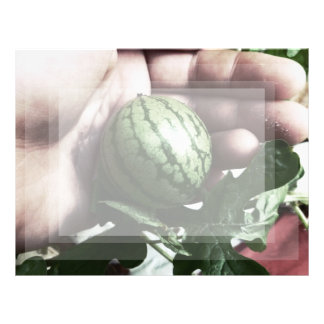 Baby watermelon in hand fruit picture letterhead