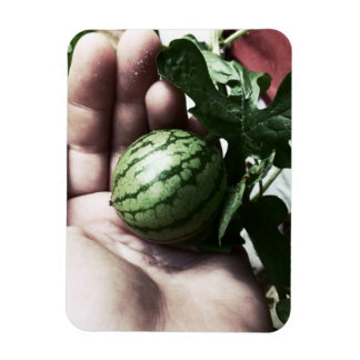 Baby watermelon in hand fruit picture magnets