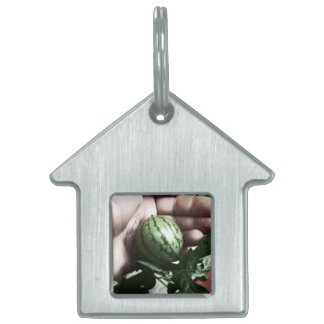 Baby watermelon in hand fruit picture pet tags