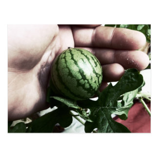 Baby watermelon in hand fruit picture postcard