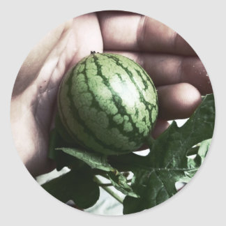Baby watermelon in hand fruit picture round sticker