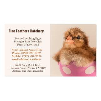 Baby Welsummer Chick in Egg Chicken Hatchery Business Card Template
