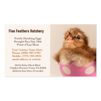 Baby Welsummer Chick in Egg Chicken Hatchery Double-Sided Standard Business Cards (Pack Of 100)