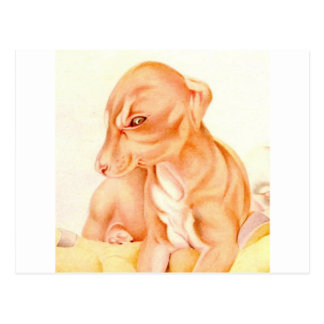 Baby Whippet - SUPER CUTE ! Postcard