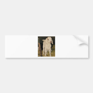 Baby White Goat 213 Bumper Sticker