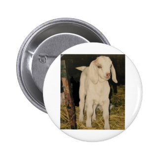 Baby White Goat 213 Pin