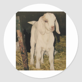 Baby White Goat 213 Classic Round Sticker