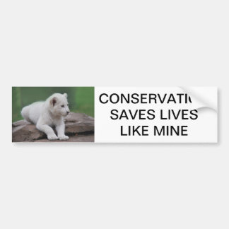 Baby white lion cub 2 bumper stickers