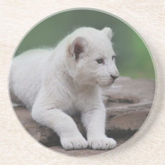 Baby white lion cub 2 drink coaster