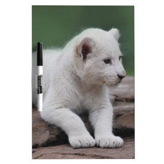 Baby white lion cub 2 dry erase board