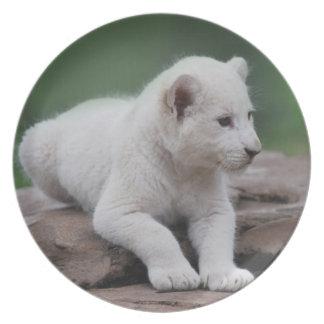 Baby white lion cub 2 melamine plate