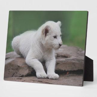 Baby white lion cub 2 plaque