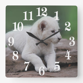 Baby white lion cub 2 square wall clock