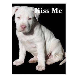 White Pit Bull Puppy Postcards Zazzle