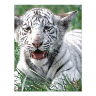Baby White Tiger Letterhead Template