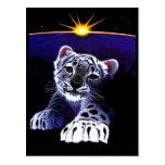 Baby White Tiger Postcard