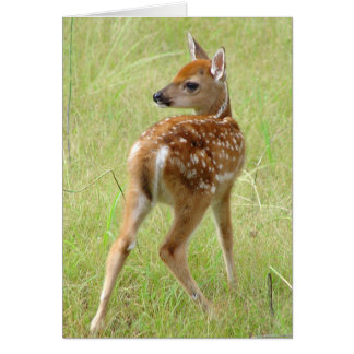 Baby Whitetail Deer Fawn 6 Greeting Card