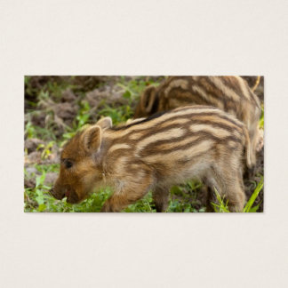 Baby Wild Boar Business Card