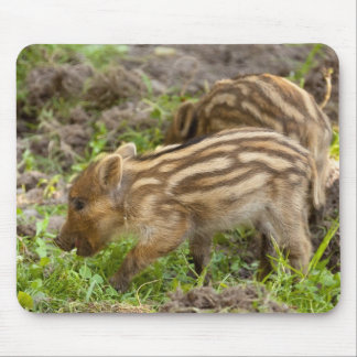 Baby Wild Boar Mouse Pad