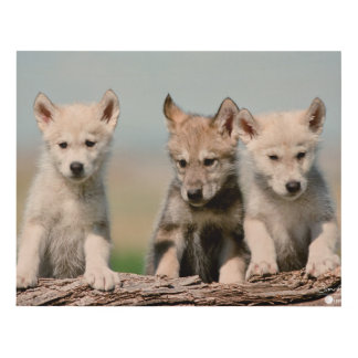 Baby Wolves Panel Wall Art