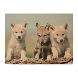 Baby Wolves Wood Print