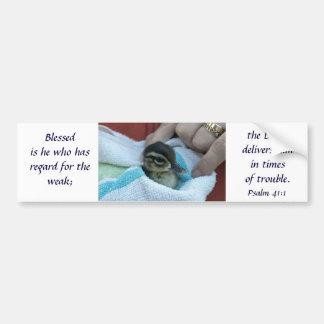 Baby Wood Duck Bumper Sticker
