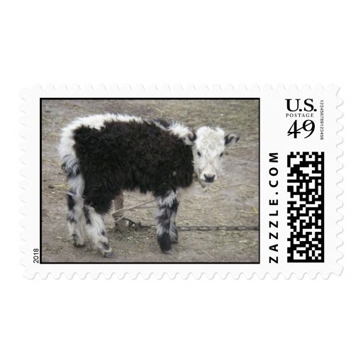 baby yak postage