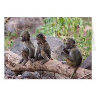 Baby Yellow Baboons Card
