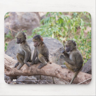 Baby Yellow Baboons Mouse Pad