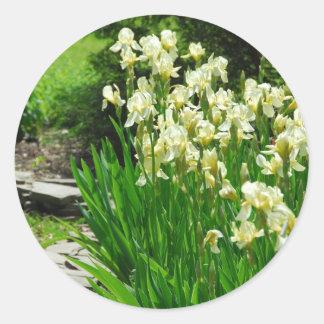 Baby Yellow Irises Classic Round Sticker