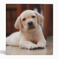 Baby Yellow Labrador Puppy Dog laying on Belly Binder
