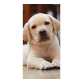 Baby Yellow Labrador Puppy Dog laying on Belly Card