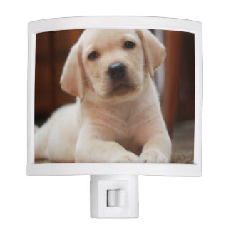 Baby Yellow Labrador Puppy Dog laying on Belly Night Lights