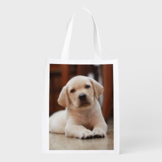 Baby Yellow Labrador Puppy Dog laying on Belly Grocery Bags