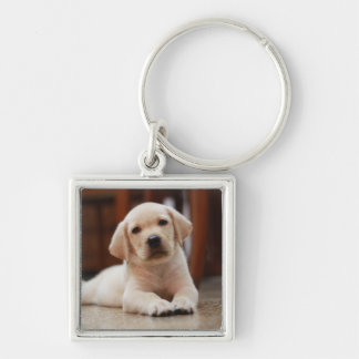Baby Yellow Labrador Puppy Dog laying on Belly Keychain