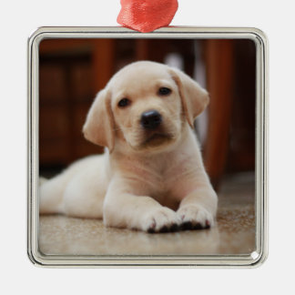 Baby Yellow Labrador Puppy Dog laying on Belly Metal Ornament