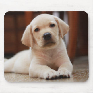 Baby Yellow Labrador Puppy Dog laying on Belly Mouse Pad