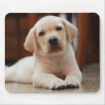 Baby Yellow Labrador Puppy Dog laying on Belly Mousepads