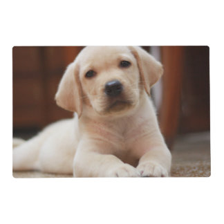 Baby Yellow Labrador Puppy Dog laying on Belly Placemat