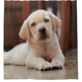 Baby Yellow Labrador Puppy Dog Laying On Belly Shower Curtain