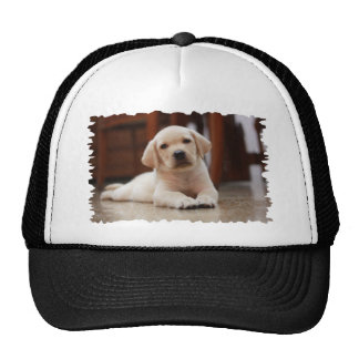 Baby Yellow Labrador Puppy Dog laying on Belly Trucker Hat