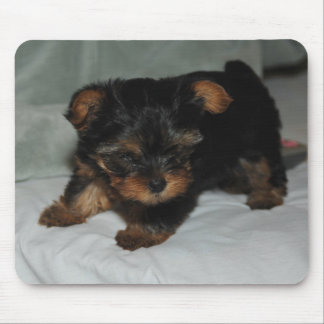 baby yorkie mouse pad