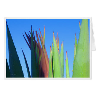 Baby Yucca Stalk Card