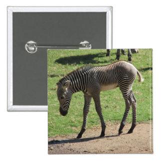 Baby Zebra Button